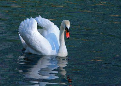 London-Swan